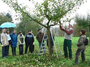 Obstbaumschnitt, Gartentermine 2018