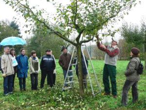 Gartenseminare, Apfelbäume richtig schneiden,