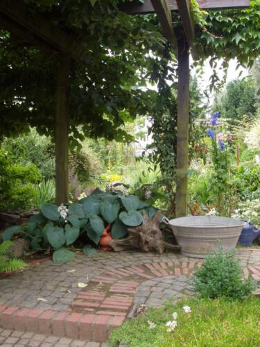 Funkie im Vorgarten