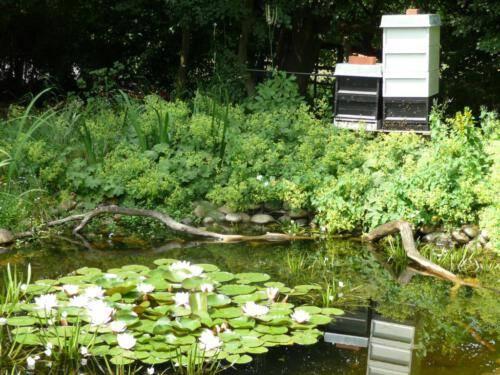 Bienenstock am Teich